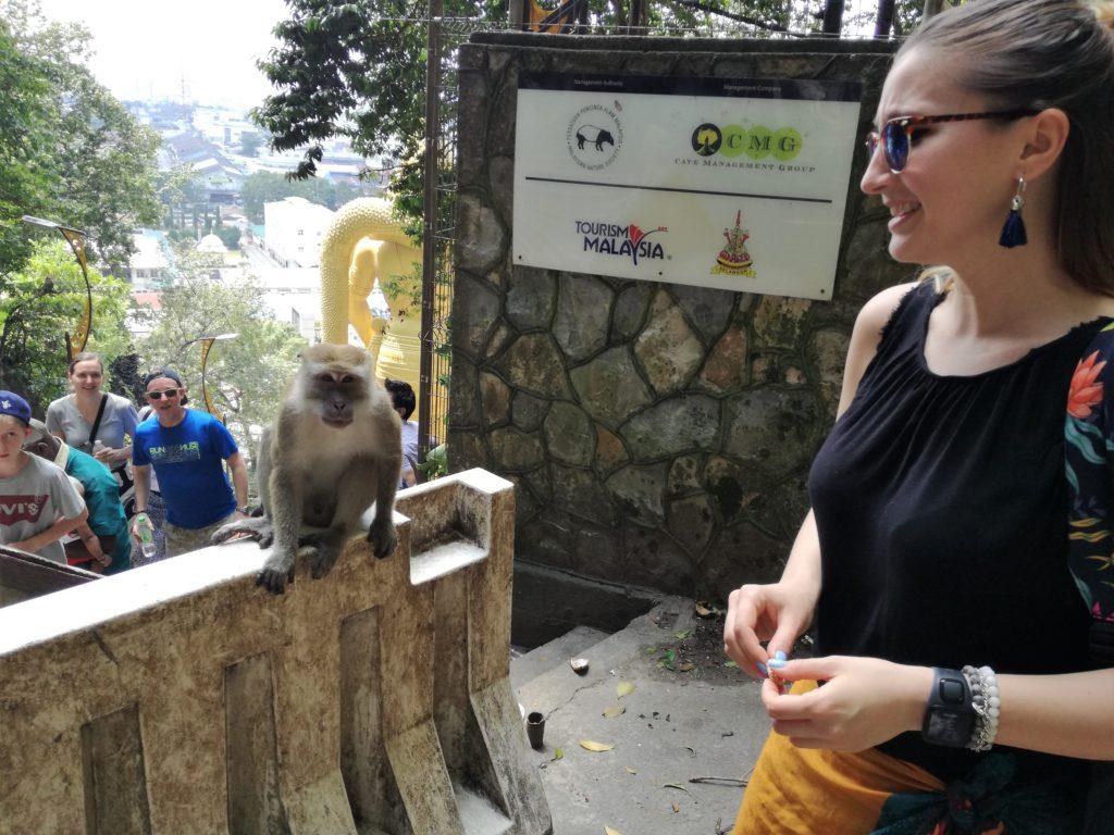 batu caves monkey malaysia
