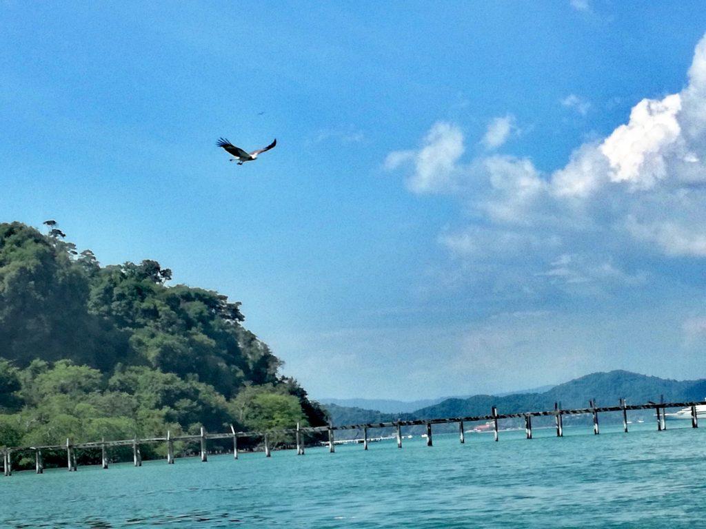Pulau Singa Besar eagles feeding